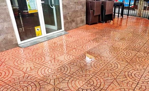 limpieza terraza negocios en calpe